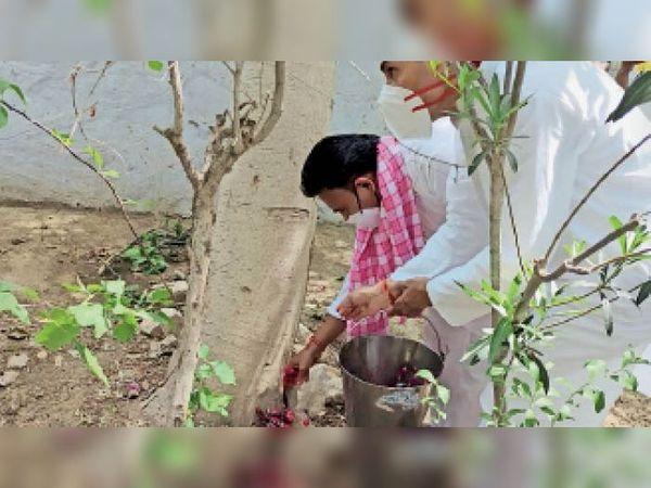 सोजत रोड. मुक्तिधाम में डॉ. बी.सी. अग्रवाल की अस्थियां पेड़ों में समर्पित करते पुत्र। - Dainik Bhaskar