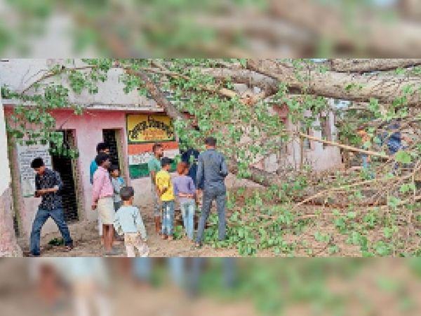 पोहरी क्षेत्र में आंधी से गिरा पेड़। - Dainik Bhaskar