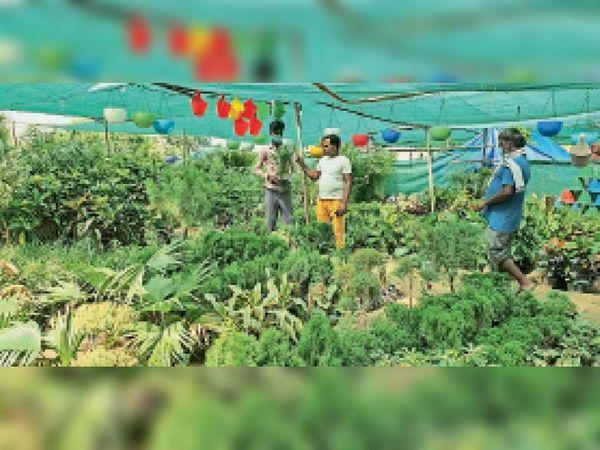 कुरुक्षेत्र | नर्सरी में पौधों की खरीदारी करते लोग। - Dainik Bhaskar