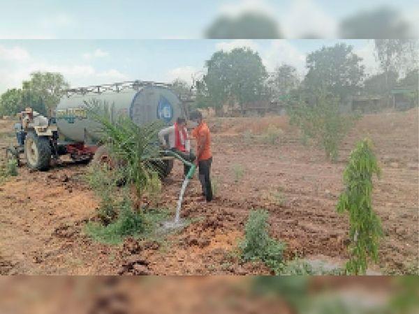 बिड़वाल. गाेशाला में लगाए गए पाैधाें काे युवा समय-समय पर टैंकर से दे रहे पानी। क्योंकि आठ माह तक बोरिंग से पानी मिल जाता है लेकिन गर्मी में होती है परेशानी। - Dainik Bhaskar