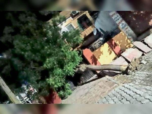 भरतपुर. रंजीत नगर में तेज अंधड़ से गिरा पेड़। - Dainik Bhaskar