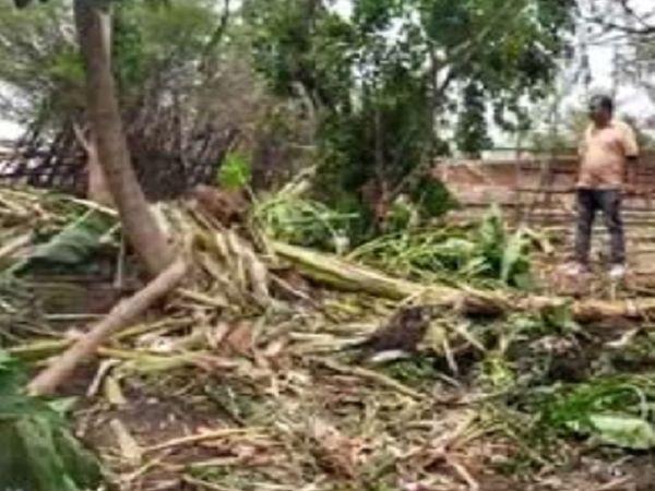 रिहायशी क्षेत्र में कुछ इस तरह से हाथियों का दल नुकसान कर रहा है।