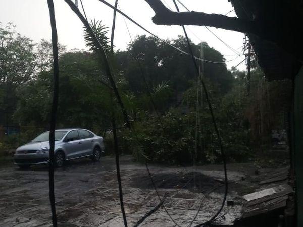 बिजली लाइन पर पेड़ गिरा।