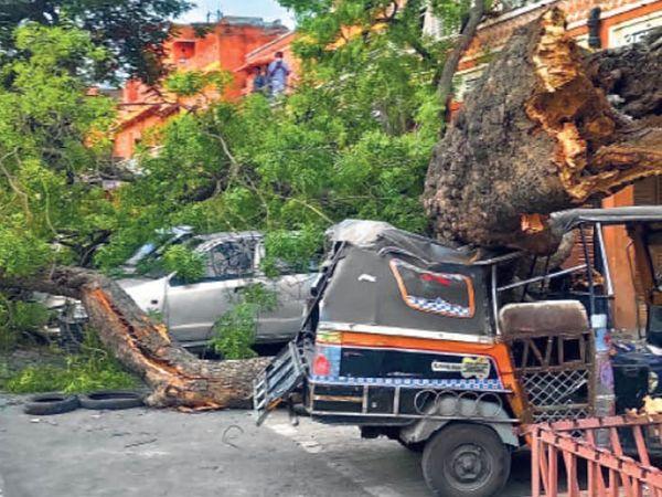 किशनपोल बाजार में गाड़ियों पर गिरा पेड़। - Dainik Bhaskar
