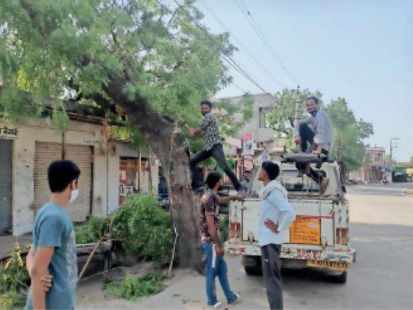 शटडाउन के दौरान बिजली के तारों पर आ रही पेड़ों की टहनियां काटते हुए। - Dainik Bhaskar