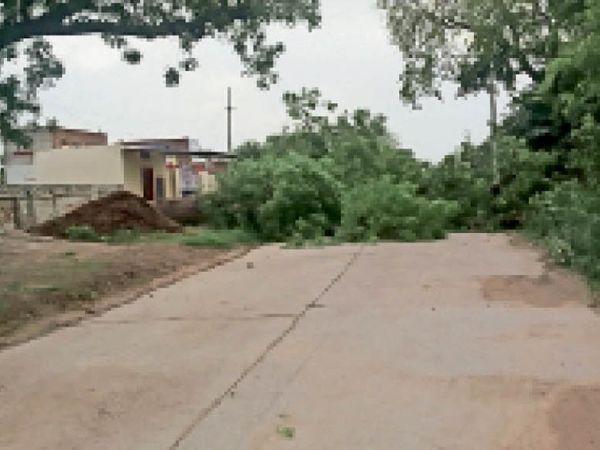 पटोंदा के आरओबी के पास अंधड़ से रास्ते में गिरा पेड़। - Dainik Bhaskar