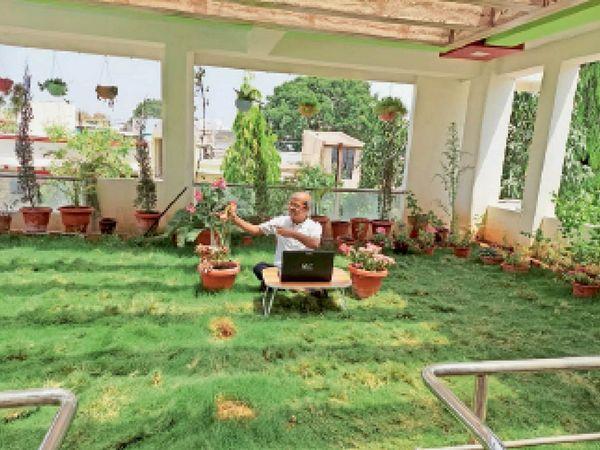बॉटनी के विभागाध्यक्ष डॉ व्यास अपनी छत पर लेपटॉप से संबंधित पौधे की जानकारी अपने विद्यार्थियों से शेयर करते हैं। - Dainik Bhaskar