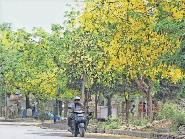 मौसम में रंगत आई। - Dainik Bhaskar