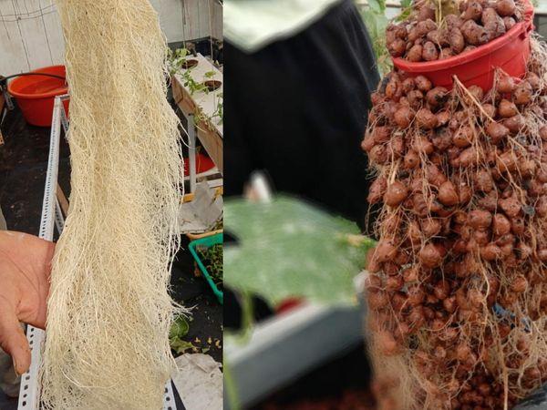 अभय कोकोपीट की जगह खुद का डेवलप किया हुआ ग्रोइंग चैंबर इस्तेमाल करते हैं। इससे खेती में लागत कम आती है।