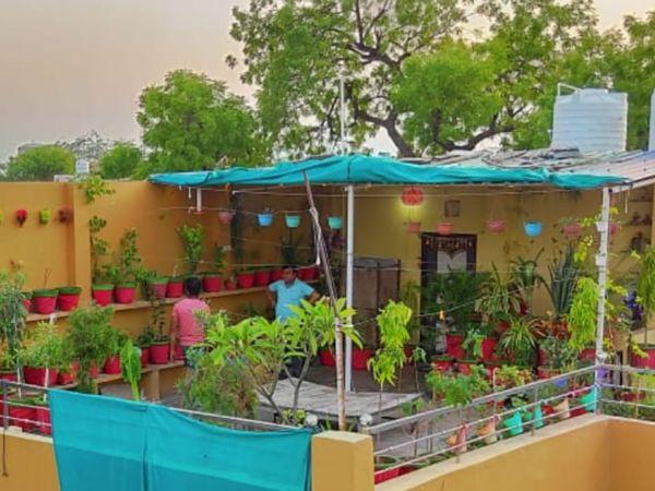छत पर लगाए गुलाब, मोगरा, एलोवेरा, चीकू सहित दर्जनों किस्म के पौधे। - Dainik Bhaskar