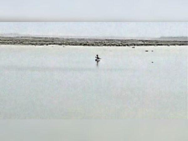 बालेर |चंबल घड़ियाल चंबल नदी में मध्यप्रदेश के मछुआरे राजस्थान की सीमा में आकर कर रहे मत्स्याखेट। - Dainik Bhaskar