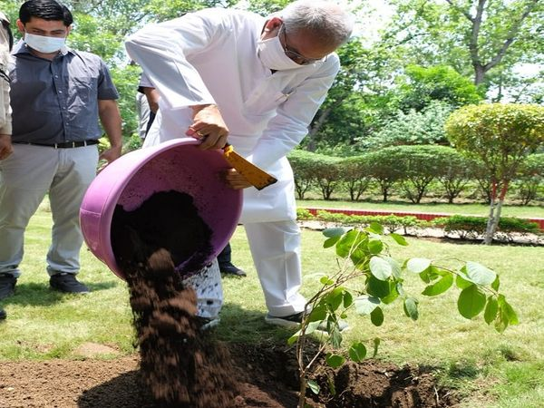 मुख्यमंत्री भूपेश बघेल ने अपने आवास परिसर में लगाया हर्रा और चार का पौधा। - Dainik Bhaskar