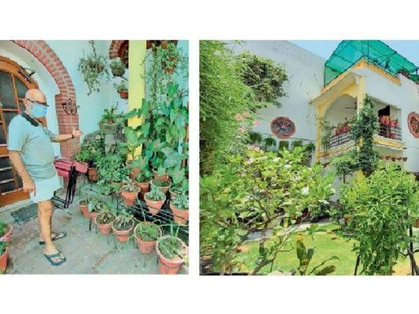 अम्बाला सिटी | मनाली हाउस में घर में लगाए गए पाैधे दिखाते वेद प्रकाश विज और घर में हर तरफ लगे पौधे। भास्कर - Dainik Bhaskar