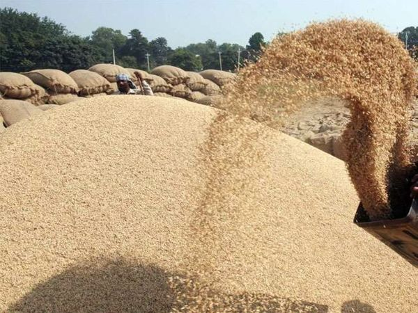 आरोप लगाया है कि कंपनियों ने किसानों के साथ धोखाधड़ी की है। सरकार से वसूल ली रकम, पर किसानों में नहीं बांटी। - Dainik Bhaskar