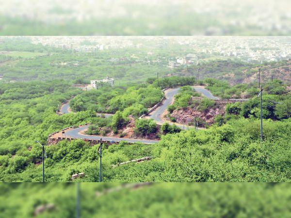 बारिश होने से पुष्कर घाटी में जून महीने में ही हरियाली छाई हुई है। - Dainik Bhaskar