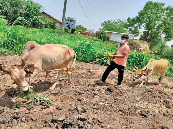 खेत पर पशु चरा रहे रोहनवाड़ी गांव के चिराग ने आईआईटी कानपुर से केमिकल इंजीनियरिंग की है। - Dainik Bhaskar
