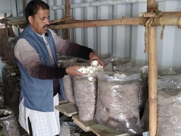 भरत सिंह मशरूम की खेती भी करते हैं। उन्होंने अपने घर पर ही मशरूम उगाने की व्यवस्था की है। वे इससे पाउडर और अचार तैयार करते हैं।