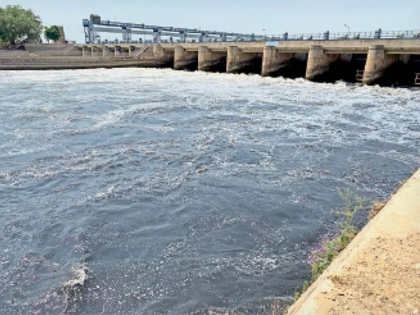 पंजाब में हरिके बैराज के समीप नहर में बह रहा प्रदूषित पानी। - Dainik Bhaskar