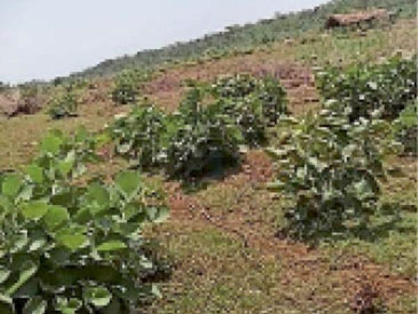 फटीदान्त नदी की तरी में बने टपरे - Dainik Bhaskar