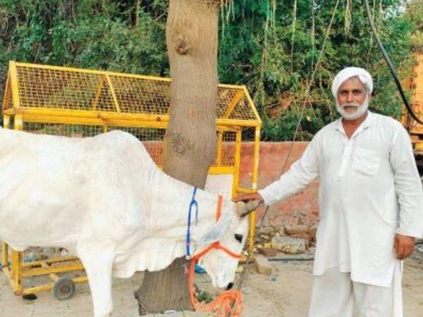 टोहाना  थाने में धरने पर एक किसान अपनी गाय को लेकर पहुंच गया। किसान ने कहा कि पुलिस ने मांगें नहीं मानी तो यहां पक्का मोर्चा बनाकार लगातार धरना दिया जाएगा। अपने पशु भी यहीं ले आएंगे।