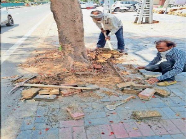 पत्र में ये भी बताया- दुकानों के आगे पार्किंग में बाधा बन रहे थे पेड़ - Dainik Bhaskar