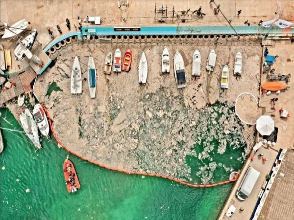 सी-स्नॉट (समुद्री गाद) मारमरा सागर की ऊपरी सतह से 100 फीट की गहराई तक जम चुका है। - Dainik Bhaskar