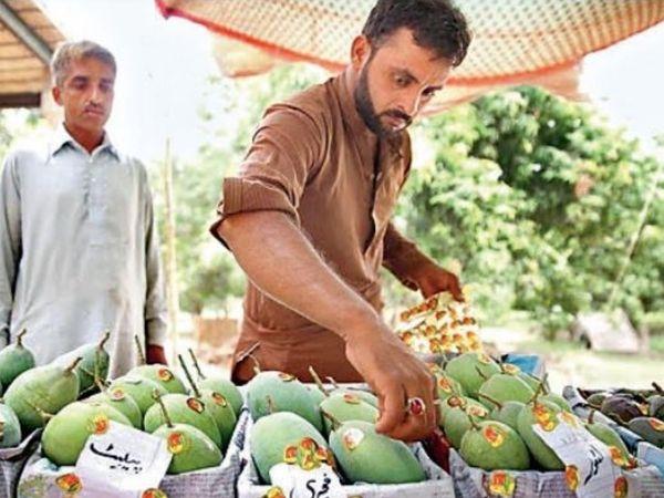 Pakistan's best friend China has not liked 'Mango Diplomacy'.  He has returned the mangoes sent by Pakistan.  - Dainik Bhaskar