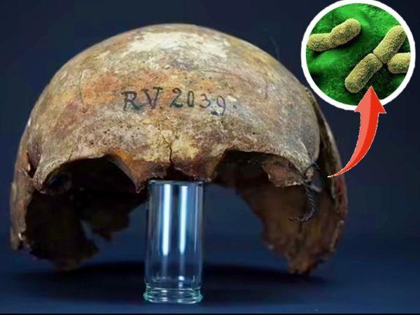 लाटविया के रिन्नूकाल्न्स इलाके में 5 हजार साल पहले दफनाए गए शिकारी की खोपड़ी से मिला बैक्टीरिया। - Dainik Bhaskar