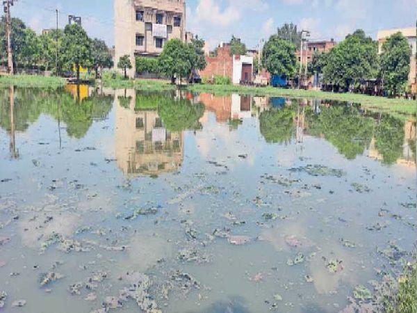 फोकल प्वाइंट इलाके में खाली पड़े प्लॉट में भरा पानी, जहां लार्वा पनप रहा है। - Money Bhaskar