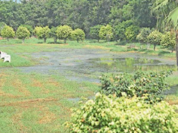ग्यासपुरा पार्क में जमा पानी से बीमारी फैलने का खतरा। - Money Bhaskar