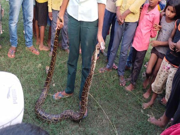 अजगर को वन विभाग की टीम ने सुरक्षित मदनपुर क्षेत्र में छोड़ दिया। - Money Bhaskar