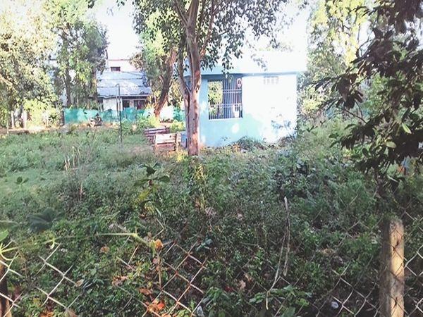 कमिश्नर कॉलोनी स्थित पार्क में उगी झाड़ियां। - Money Bhaskar