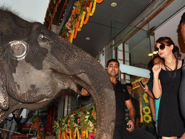 वाराणसी येथे आलेल्या अॅक्ट्रेस मोनिका बेदीचे स्वागत करण्यासाठी दोन मोठे हत्ती बोलावण्यात आले होते. मात्र पहिल्यांदा हे हत्ती पाहताच मोनिका घाबरली आणि हत्तींपासून एकदम दूर झाली. - Divya Marathi