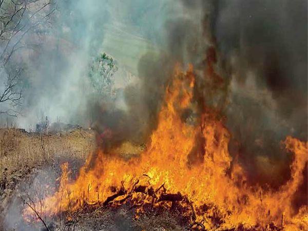 वेरूळ लेणीच्या डोंगरास लागलेली आग - Divya Marathi