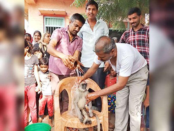 अंत्ययात्रेपूर्वी माकडाला आंघोळ घालण्यात आली. - Divya Marathi