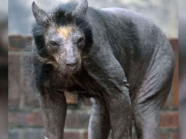 जरा ओळखा पाहू, हा कोणता प्राणी आहे? - Divya Marathi