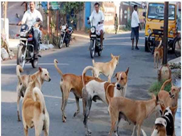 16 कुत्र्यांना विष घालून तर 4 कुत्र्यांना जीवंत जाळले आहे. - Divya Marathi