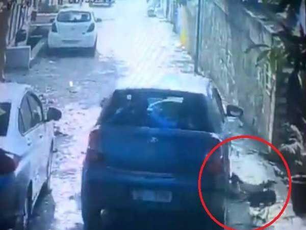 सीसीटीव्ही कॅमे-यात कैद झालेली ही घटना- यात कुत्र्यांवर कार चढवताना चालक दिसत आहे. - Divya Marathi