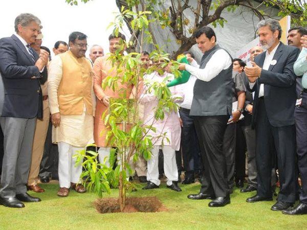 2017 ते 2019 कालावधीत वन विभागाने व्यक्ती, संस्था, सरकारी संस्था, संघटना आणि उद्योग समूहांच्या माध्यमातून 50 कोटी वृक्ष लावण्याची मोहीम राबवली. (फाइल फोटो) - Divya Marathi