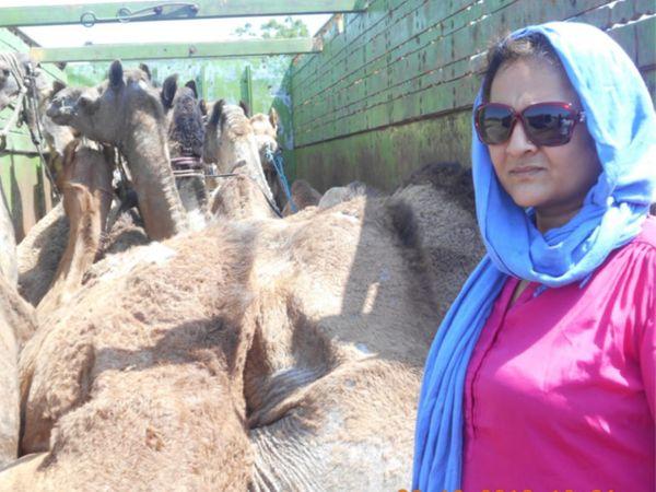વડોદરાની મહિલા એક્ટિવિસ્ટે રાજસ્થાનમાં ઊંટની તસ્કરીનો કર્યો પર્દાફાશ, 52 ઊંટને બચાવ્યા - Divya Bhaskar