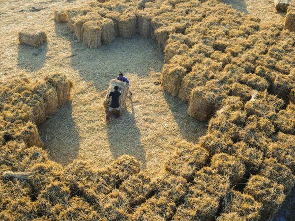 સુરતમાં ડાંગરનો પાક લીધા બાદ રો-મટિરિયલ તરીકે બાકી વધતું ઘાસ કે જે પરાળ તરીકે ઓળખાય છે. આ પરાળને ખેડૂતો સળગાવી દેતા હોય છે. જેનાથી હવામાં પ્રદૂષણ પણ ફેલાય છે. - Divya Bhaskar