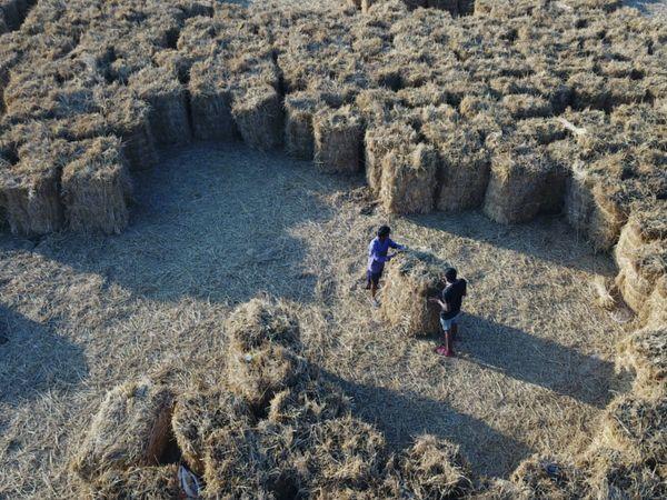 સુરતની આસપાસના ગામોમાં 15 ઓક્ટોમ્બર પછી ડાંગરની ખેતીની સિઝન પૂર્ણ થતાં તેના પરાળમાંથી ગાંસડીઓ બનાવાઈ રહી છે. આ ઘાસ માટે વેપારીઓ એક એકર દીઠ 8થી 10 હજાર જેટલો ભાવ આપે છે, તેવું ખેડુત અગ્રણી જયેશ પટેલનું કહેવુ છે.