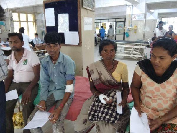 કૂતરાં કરડી જતાં ઈજાગ્રસ્તોને હોસ્પિટલમાં સારવાર માટે મોકલવામાં આવ્યાં હતાં. - Divya Bhaskar