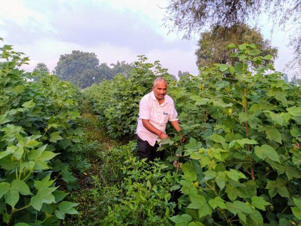 પ્રગતિશિલ ખેડૂત વનરાજસિંહ - Divya Bhaskar