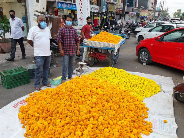 આરડોલીના બજારમાં ગલગોટાના ફૂલો નું વેચાણ - Divya Bhaskar
