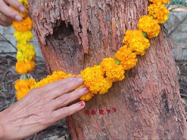 2008માં નોકરીની શરૂઆતથી વન પાલ મુકેશભાઇ દર વર્ષે નવા વર્ષની શરૂઆત વૃક્ષ પૂજાથી કરે છે