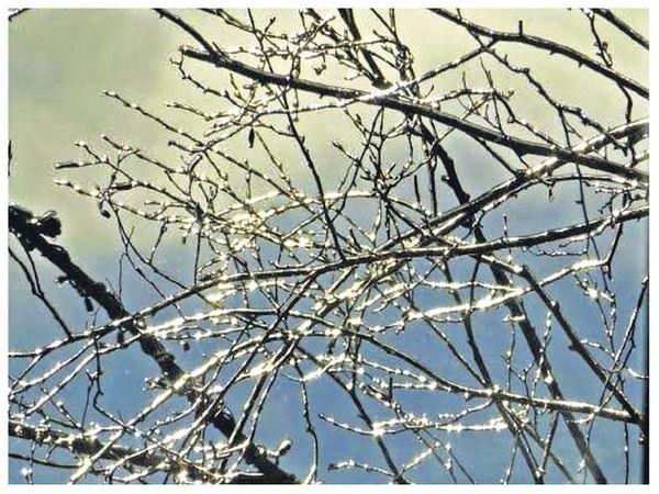 માઉન્ટ આબુમાં વૃક્ષની ડાળીઓ પર બરફ જામ્યો. - Divya Bhaskar