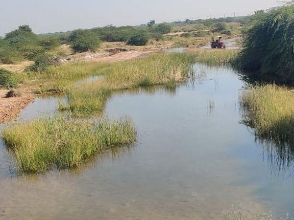 પાણી ખેતરોમાં છોડવામાં આવે છે.