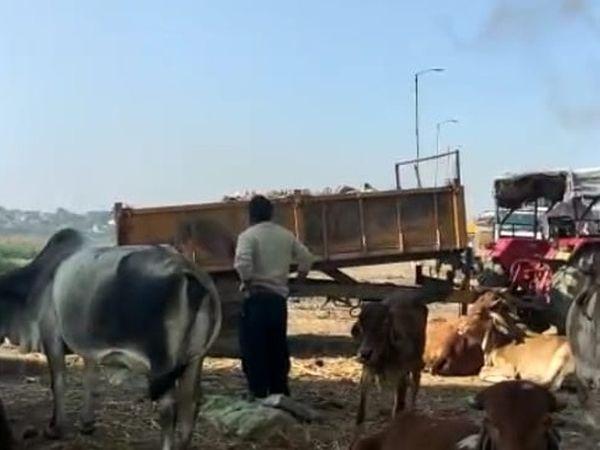 પાલિકાના સેનીટેશન વિભાગના ટ્રેક્ટરો દ્વારા શહેરમાંથી કચરો એકઠો કરી નદીમાં ઠાલવવામાં આવતો. - Divya Bhaskar