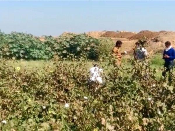 આસપાસના ખેતરમાં ઉડતી માટીને કારણે આજુબાજુના ખેતરોમાં ઉભો પાક નાશ થઈ રહ્યો હોવાના કારણે ખેડૂતોમાં ભારે આક્રોશ ફેલાયો હતો. - Divya Bhaskar